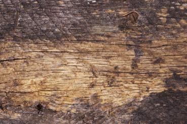 Old Wood Texture Closeup