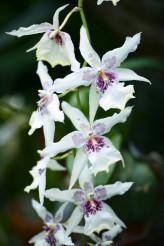 Orchidaceae Flowers