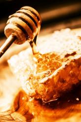 Organic Honey Tasting