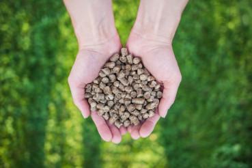 Organic Pet Food in Hands