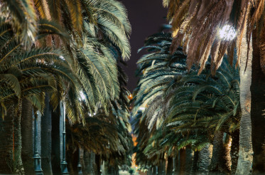 Palm Trees Alley at Night
