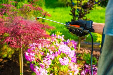 Pest Control in the Garden