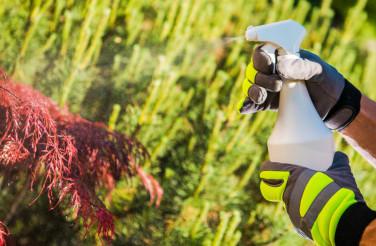 Pesticide Spraying Concept