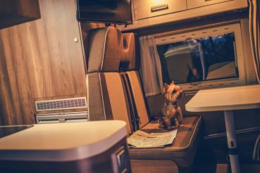 Pet in a Camper RV Motorhome