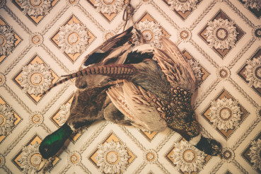 Pheasant and Duck Taxidermy