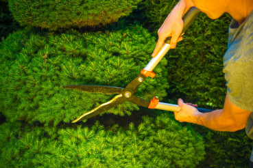 Plant Trimming in Garden