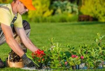 Planting New Flowers
