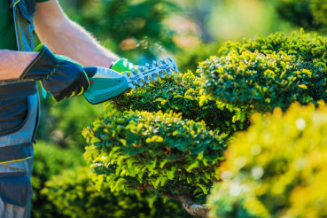 Plants Topiary Trimming