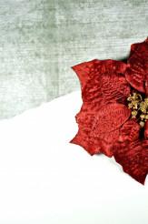 Poinsettia Flower