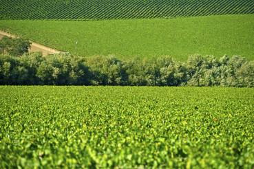 Produce Fields