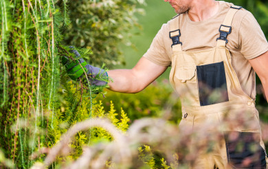 Professional Gardener Performing Plants Health Checkup