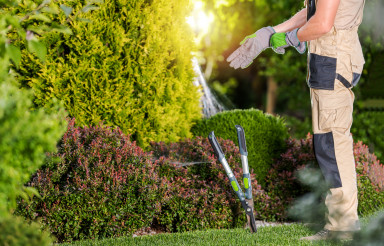 Professional Gardener Preparing Himself For Garden Job
