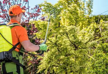 Professional Gardener Worker Insecticide Backyard Garden Plants.