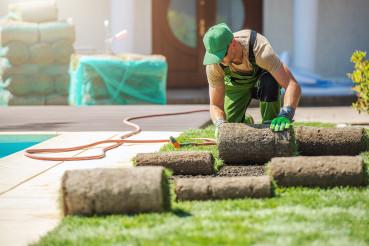 Professional Landscaper Installing New Grass Turfs in a Garden