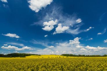 Rapeseed Fields Landscape