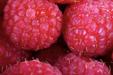 Raspberries Macro