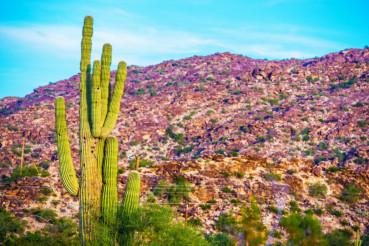 Raw Arizona Landscape