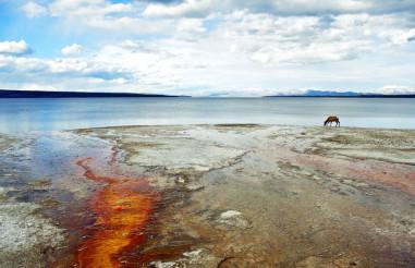 Raw Yellowstone Horizon