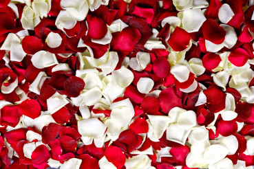 Red and White Petals