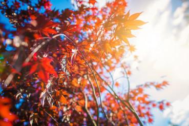 Reddish Tree Leaves