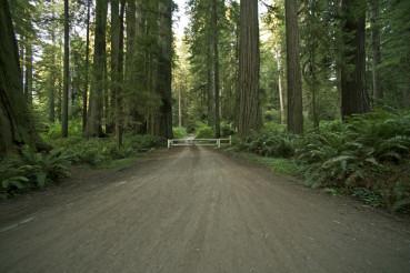 Redwood Forest Road