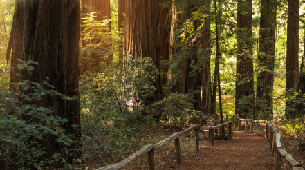 Redwood Forest Scenic Trail Path