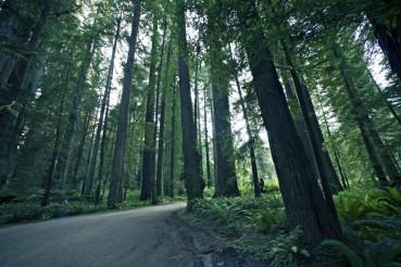 Redwood Forestry