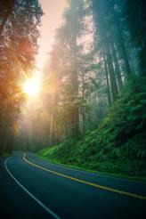 Redwood Highway Trip