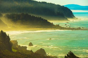 Redwood Pacific Coast