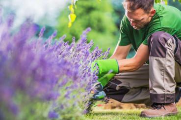 Removing Garden Weeds
