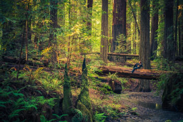 Resting on the Redwood