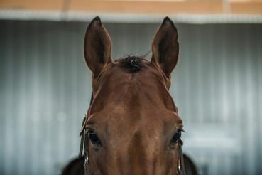 Riding Horse Portrait