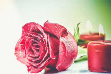 Romantic Red Rose Theme
