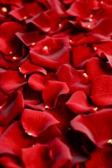 Rose Petals Closeup
