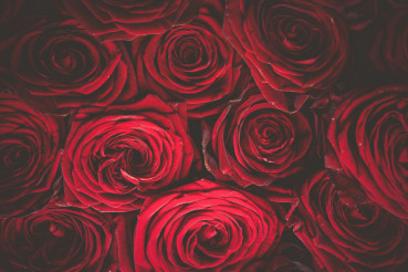 Roses Bouquet Background