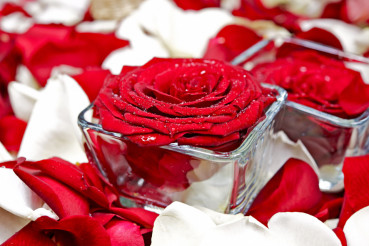Roses Decoration