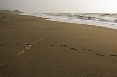 Sandy Pacific Beach