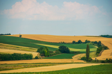Scenic Agriculture Landscape