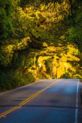 Scenic California Road