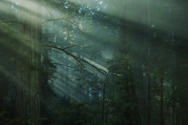 Scenic Coastal Fog Covered Redwood Forest