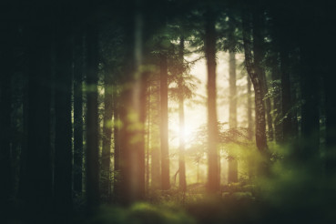 Scenic Forest Sunlight