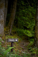 Scenic Forest Trail
