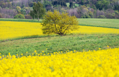 Scenic Spring Time Countryside Landscape with Lonely Tree