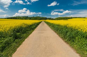 Scenic Summer Road