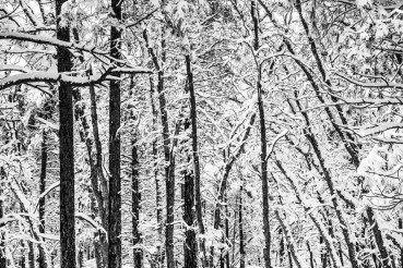 Scenic Winter Forest Pattern