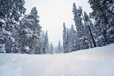 Scenic Winter Road