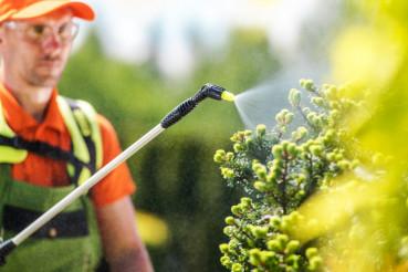 Seasonal Plants Insecticide
