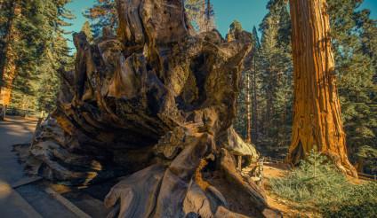 Sequoia National Park Place