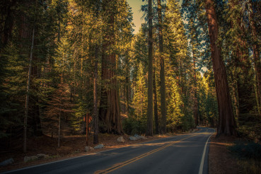 Sequoia National Park Scenic Route