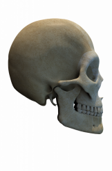 Side View Skull Graphic